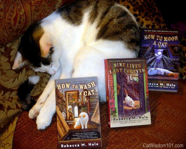 book-review-giveaway-cat-wisdom 101-rebecca m. hale