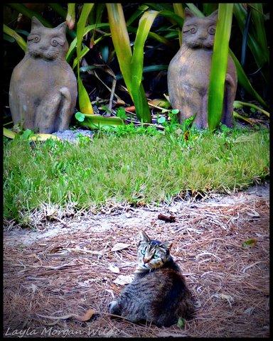 brigid's crossing-cat-sanctuary-florida