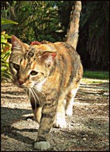 brigid's crossing-cat-sanctuary-joy
