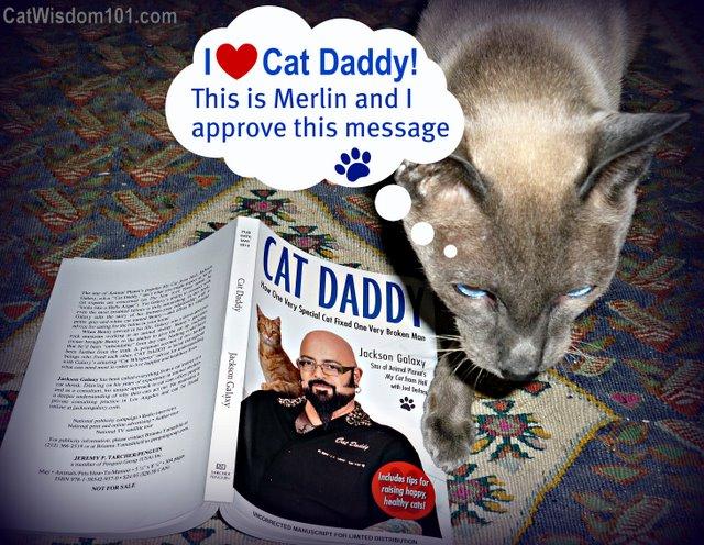 cat daddy-jackson galaxy-Cat wisdom 101