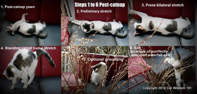 catnap-instructions-LOL-cat-cat wisdom 101