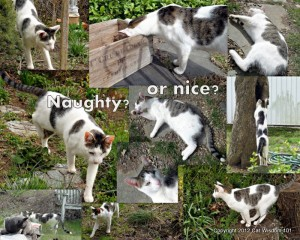 cat-spring-collage-naughty-nice-cat wisdom 101-outdoor