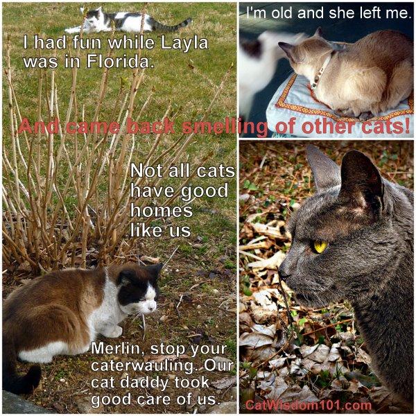 cats-talking-humor-cat wisdom 101-caturday