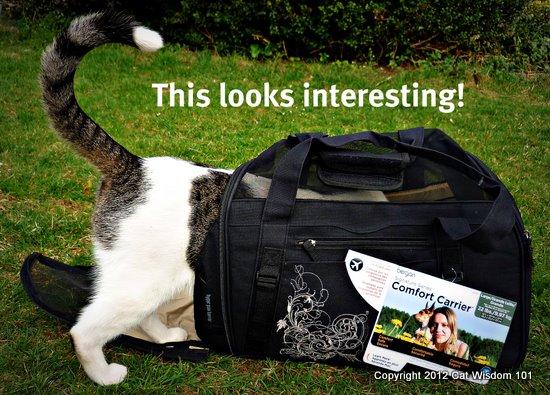 comfort carrier-bergan-Odin-cat wisdom 101