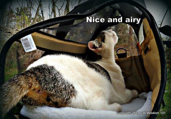 comfort carrier-cat-cat wisdom 101