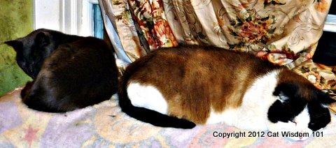 domino-gris gris-cat wisdom 101