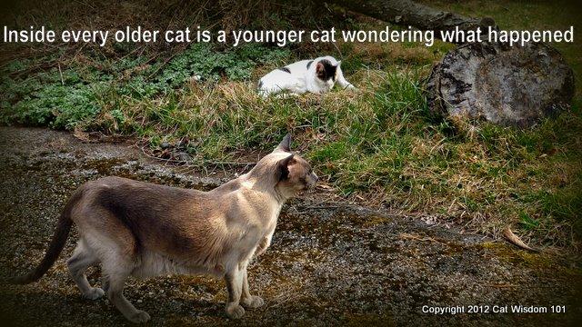 fcd-cat-feline-senility-joke-older-garden