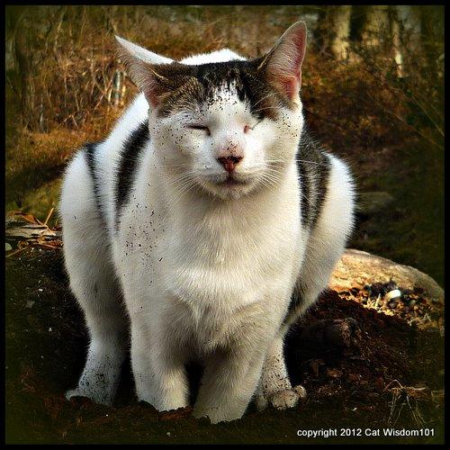 feline-cat-defecation-dirty-garden-soil-odin