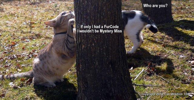 furcode-cats-mystery miss-odin-cat wisdom 101