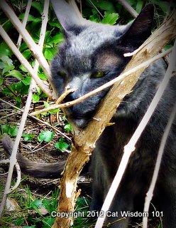 gris-gris-cat-scent-marking-cat wisdom 101
