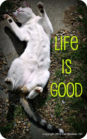 life-is-good-cute-cat-quote-cat wisdom 101