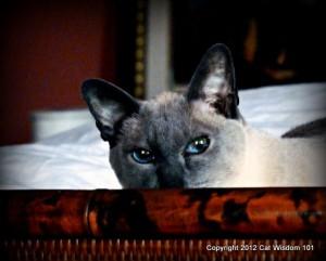 merlin-cat-cat wisdom-101-feline-art