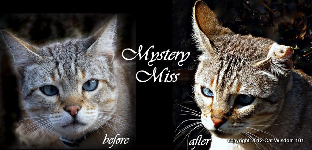 mystery miss-before-after