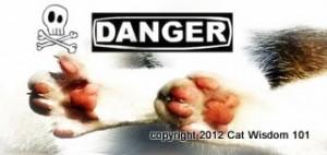 paws-poison-cats-danger-cat wisdom 101-vet 101