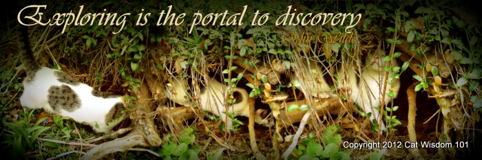 quote-Odin-exploring-roots-garden-cat wisdom 101