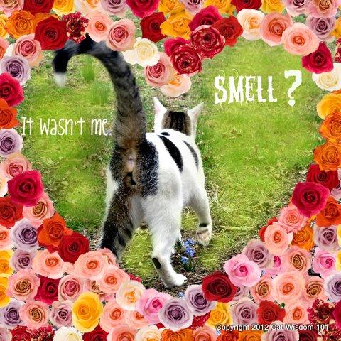smell-fart-flatulence-LOL cat-vet 101 cat wisdom 101