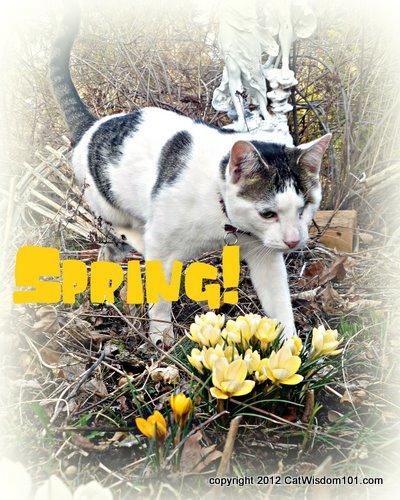 spring-cat-garden-crocus-cat wisdom 101