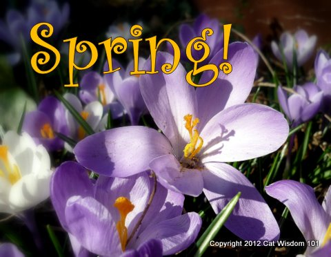 spring-crocus-cat-wisdom 101