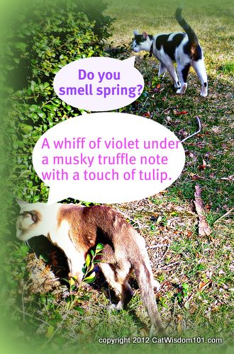 spring-sniffing-cats-humor-scent-cat wisdom 101
