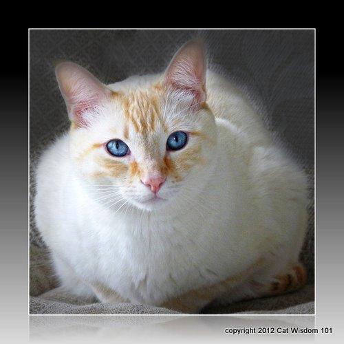 tommy-cat-cat wisdom 101