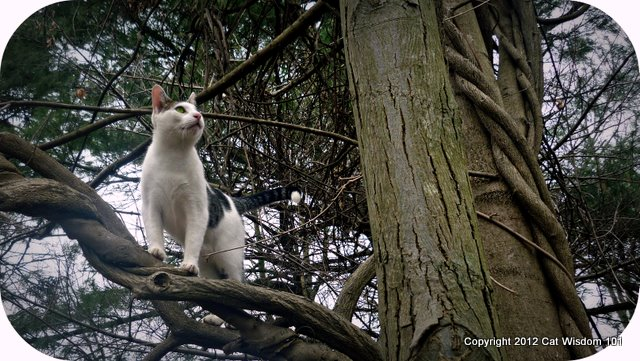 tree-cat-outdoors-spring-cat wisdom 101