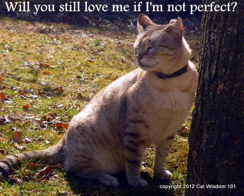 will you still love me-perfect-cat