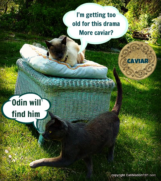 birthday-cats-garden-cat wisdom 101