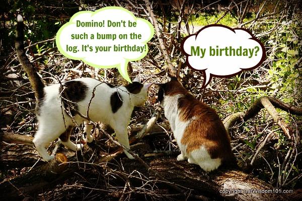 former feral birthday