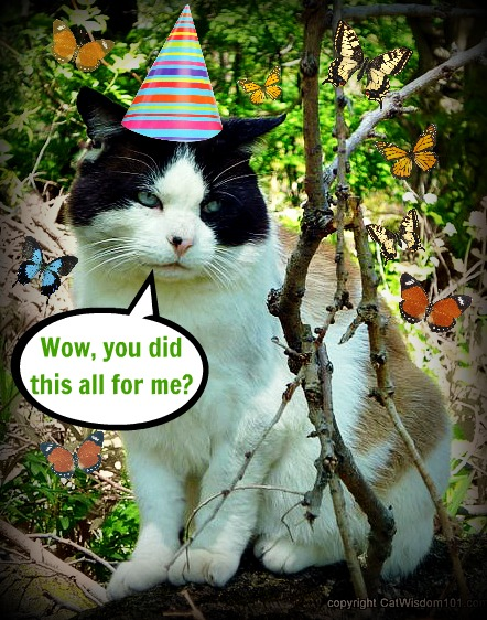 birthday-domino-cat-cat wisdom 101