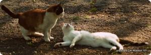 cat-brotherly-love-cat wisdom 101