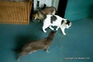 cat-dinner time-cat wisdom 101