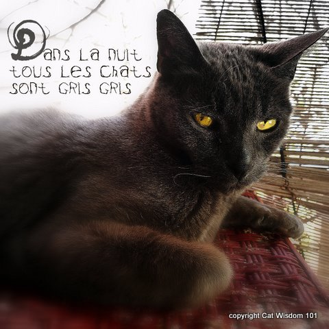 cat-grey-quote-gris-night-cat wisdom 101`