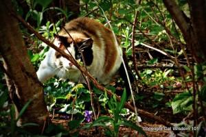 cat-jungle-art-cat-wisdom 101-domino