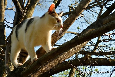 1-cat-odin-tree-limb-cat-wisdom-101 Cats March to the Beat of a Different Drummer