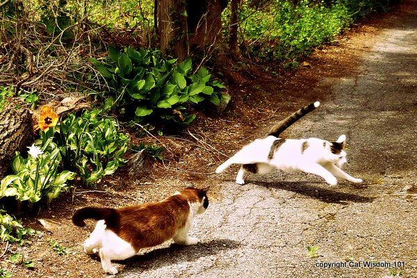 1-cat-playing-outdoors-cat-wisdom-101-odin-domino Cats March to the Beat of a Different Drummer