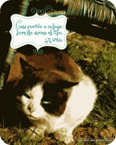 Cat-quote-comfort-refuge-life-art-domino-cat wisdom 101