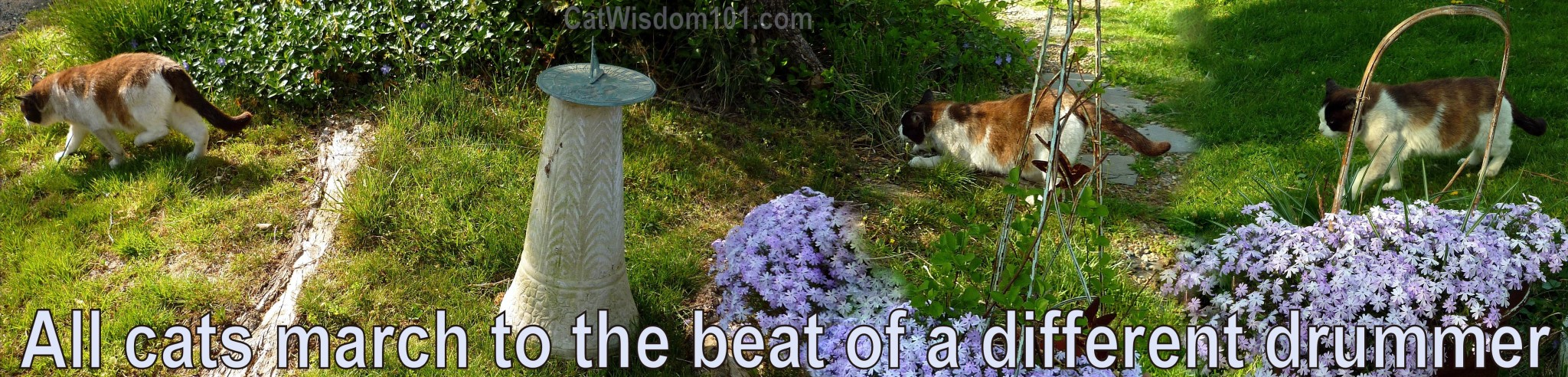 cats-quote-march-different-drummer-cat wisdom 101