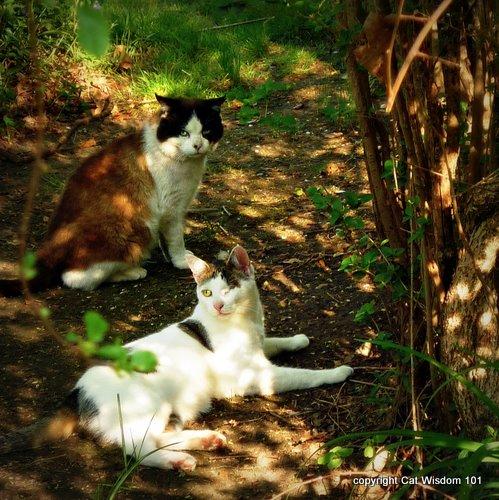 cats-ralph lauren-sun dappled-cat wisdom 101