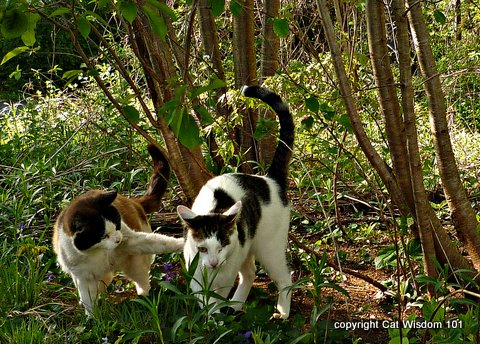 1-cats-woods-cat-wisdom-101-humor-domino-odin Cats March to the Beat of a Different Drummer