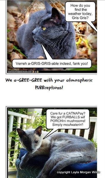 LOL-cat-cat wisdom 101