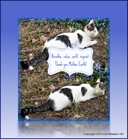 Thank-you mother earth-cat prayer-cat wisdom 101