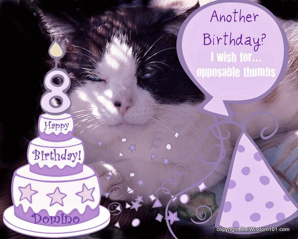 cat-domino-birthday-cat wisdom 101-cute