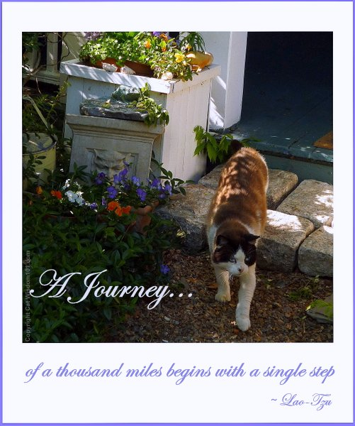 a-journey-quote-step-cat-art-cat wisdom 101