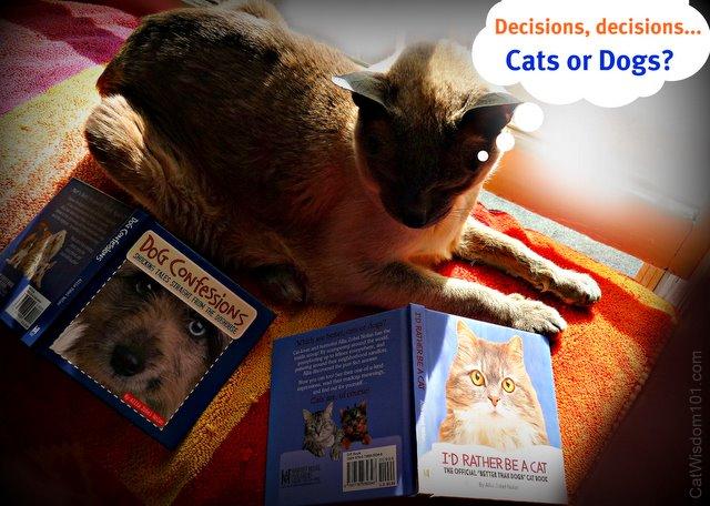 allia-zobel-nolan-cat-dog-book-giveaway-cat wisdom 101