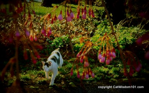 art-cat-flowers-catwisdom101