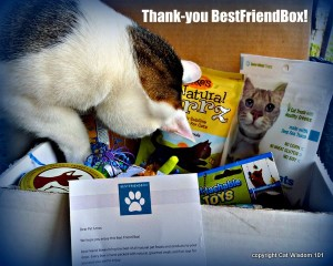bestfriendbox-giveaway-cat wisdom 101