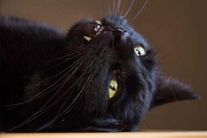 Stressed Human = Stressed Cat?