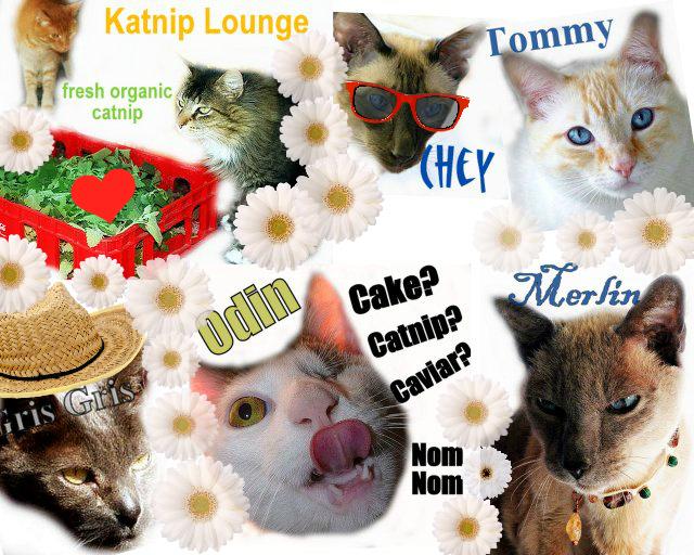 cats-birthday-cat wisdom 101
