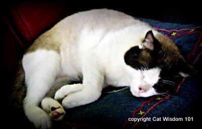domino-2008-cat wisdom 101