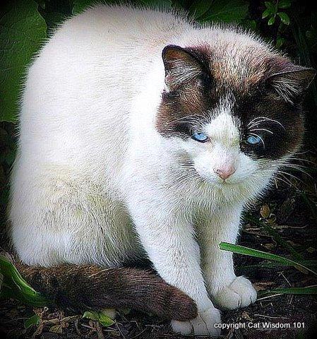 domino 2008-cat wisdom 101